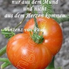 Nr. 517 / Motiv: Tomate im Mutterhaus-Garten