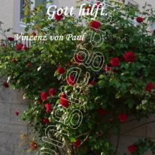 Nr. 419  /  Motiv: Rose an der Mauer in der Neuen Straße