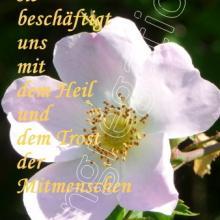 Nr. 478 / Motiv: Heckenrose im Naturschutzgebiet Gallberg