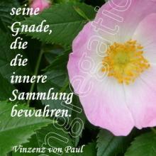 Nr. 530 / Motiv: Blüte vom Tausendjährigen Rosenstock am Hildeshimer Dom